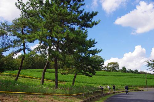 昭和記念公園201209-14