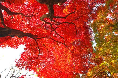京王百草園201411-9