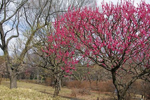 昭和記念公園201002-16