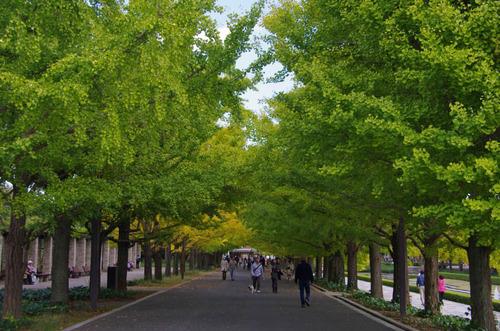 昭和記念公園201211-12