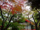 高幡不動081109-4