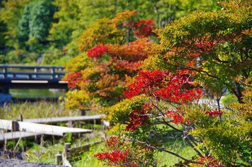 昭和記念公園201210-10