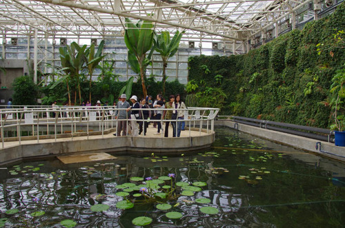 神代植物園2011-9