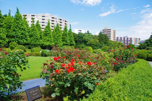新宿御苑201306-9