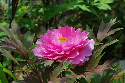 京王百草園201105-10