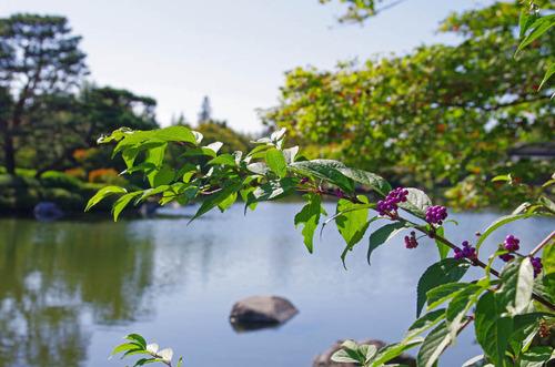 昭和記念公園201310-5