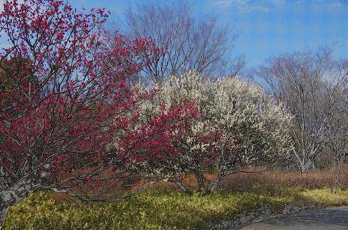 昭和記念公園201102-14