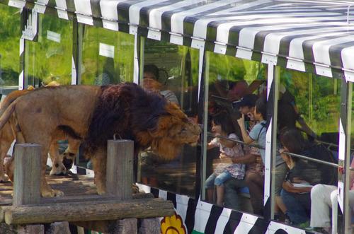 多摩動物公園201109-4
