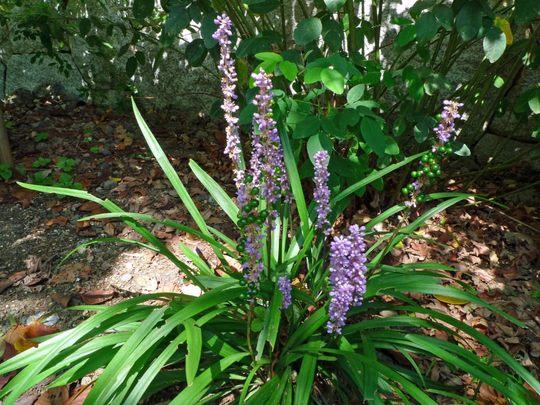 花と実200909-7