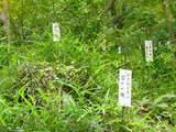 緑の高幡不動0517-3