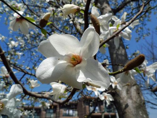 散歩道の春201003-11