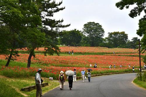 昭和記念公園201605-1