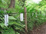 緑の高幡不動0518-5