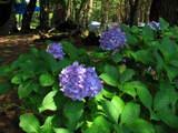 本栖湖キャンプ2008-10