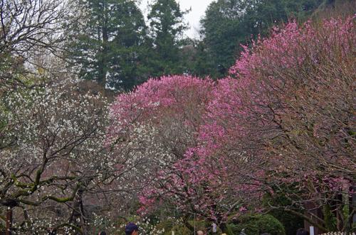 京王百草園201203-3