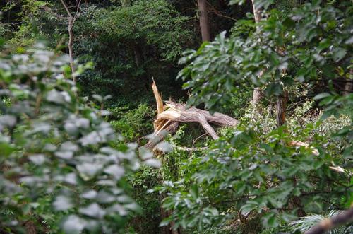 高幡不動尊201109-11