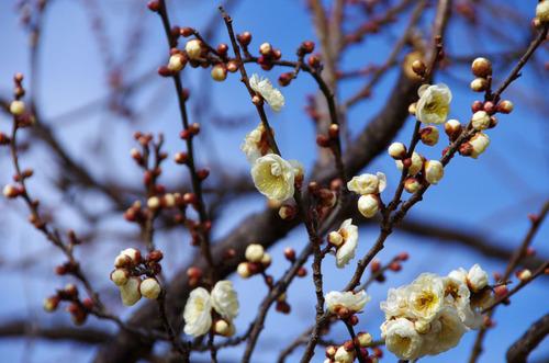 昭和記念公園201101-7