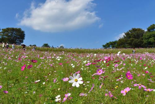 昭和記念公園201510-5