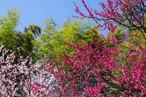 昭和記念公園日本庭園-5