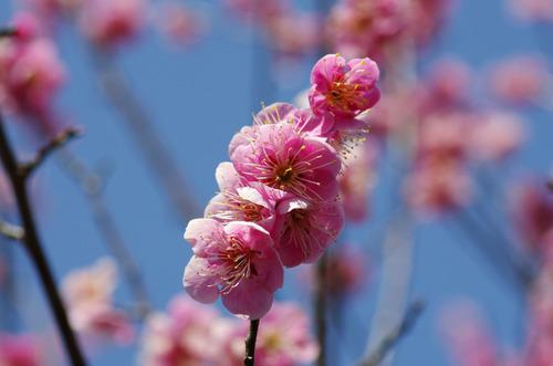 昭和記念公園201203-3