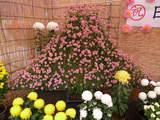 菊まつり飾り-10