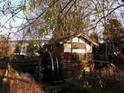 冬の向島用水路-6