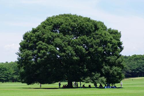 昭和記念公園201007-14
