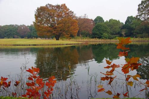 昭和記念公園201111-14