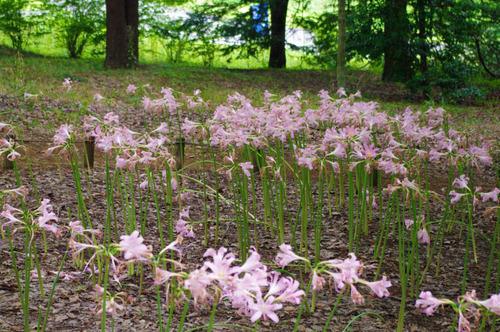 昭和記念公園201308-3
