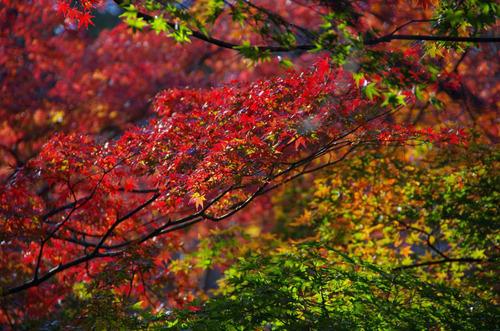 高幡不動尊201211-12