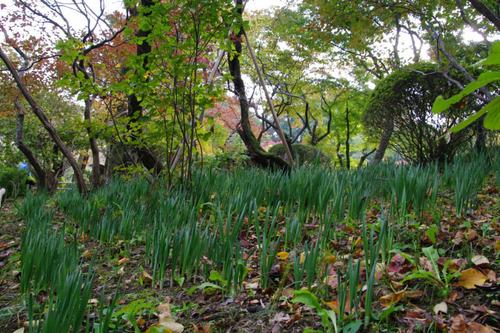 百草園紅葉201011-10