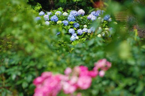新宿御苑201306-10