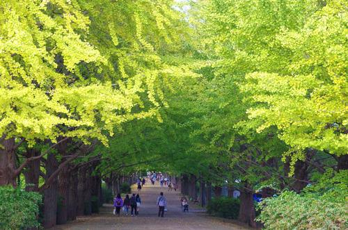 昭和記念公園201411-12