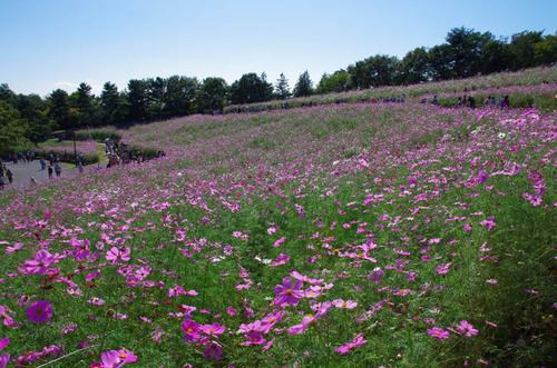 昭和記念公園201310-6