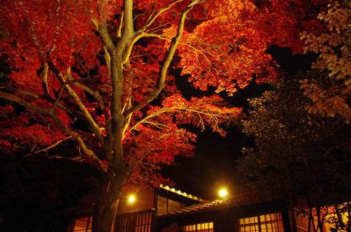 京王百草園201111-11