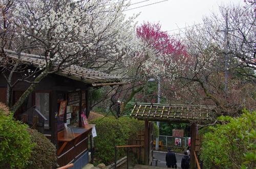 京王百草園201203-1