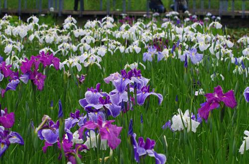 昭和記念公園201106-4