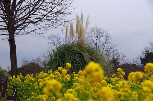 昭和記念公園201201-5