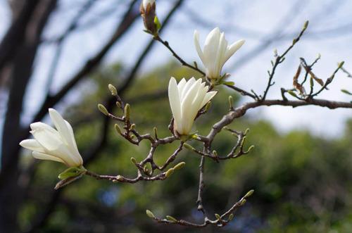 昭和記念公園201204-2