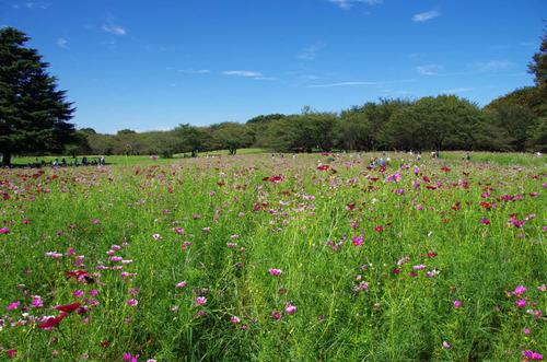 昭和記念公園201109-7