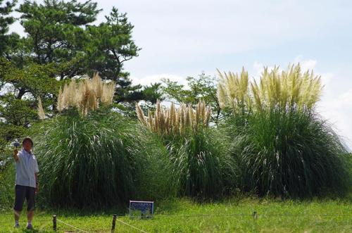 昭和記念公園201209-7