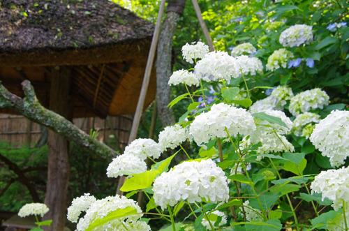 京王百草園201106-14
