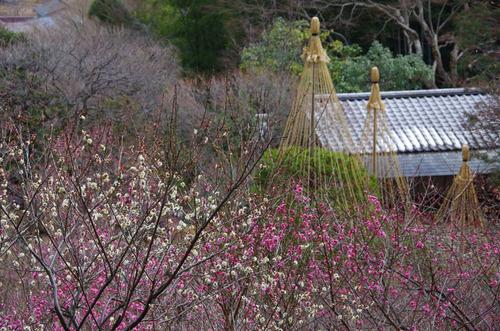 京王百草園20120303-12