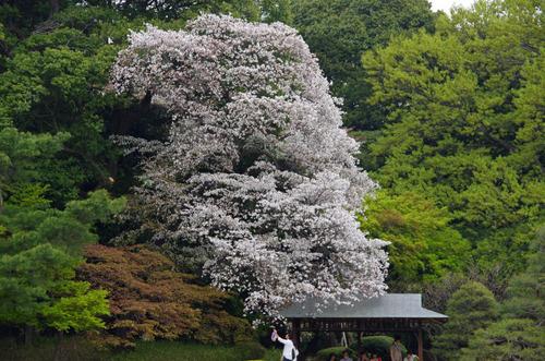 新宿御苑201104-10