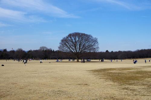 昭和記念公園201101-10
