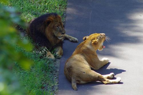多摩動物公園201109-15