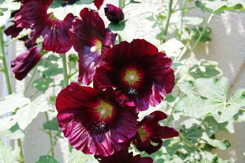 散歩道の花201006-2