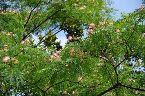 昭和記念公園201207-11