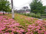 つつじと電車4
