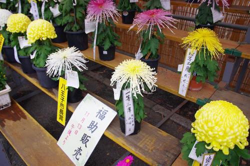 高幡不動201311-15
